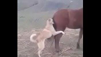 de videos xxx posiciones Granny handjob dog